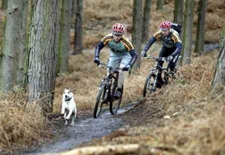 Mountain biking with your dog for fun