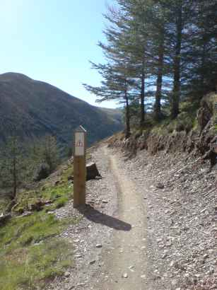 Whinlatter Mountain Bike Altura Trail