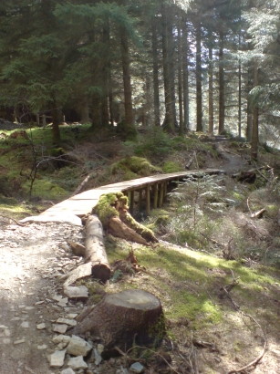 Whinlatter MountaiBike Trail