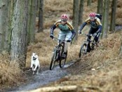 Follow the Dog on MTB