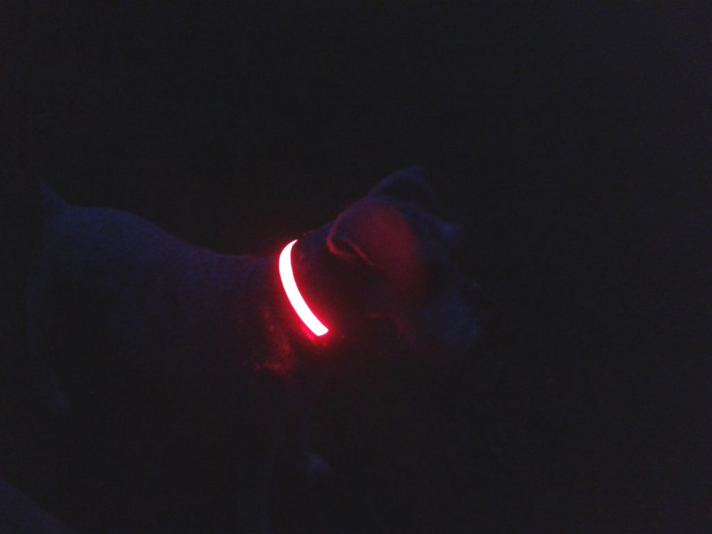 See your dog in the dark with a flashing LED dog collar