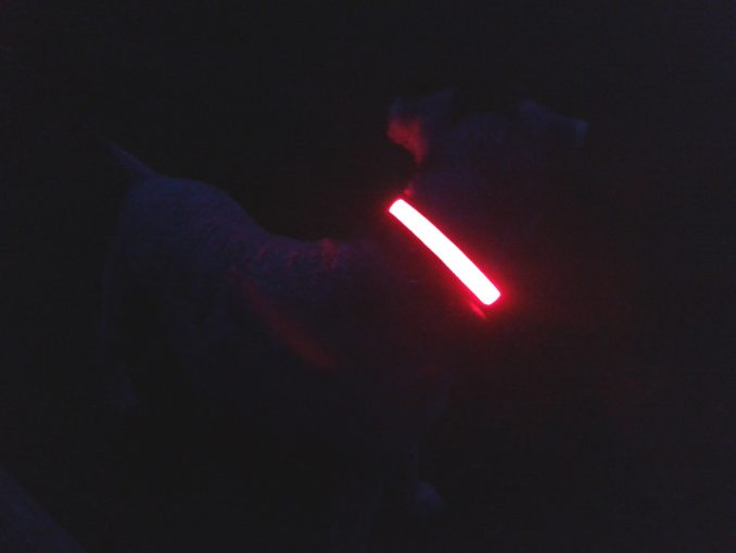 Flashing dog collars so you can see your dog in the dark