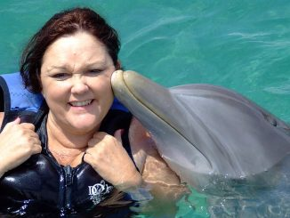 Dolphin kissing a woman swimming with dolphins