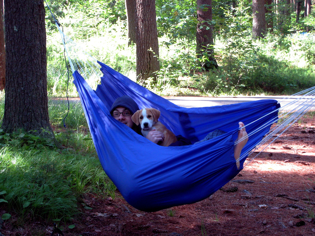 Taking your dog camping in a camping hammock