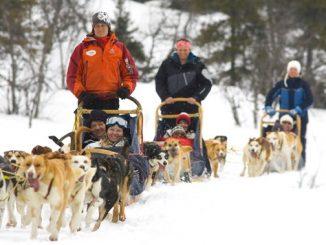 Dog Sled transfers on your ski holiday