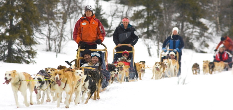 Dog Sled transfers on your ski holiday