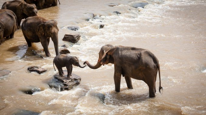 Family of elephants on safari holiday
