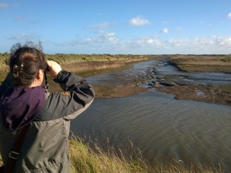Woman birdwatching on the marshes